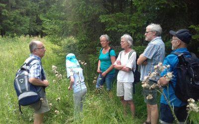 Waldwanderung in Göpfritz an der Wild