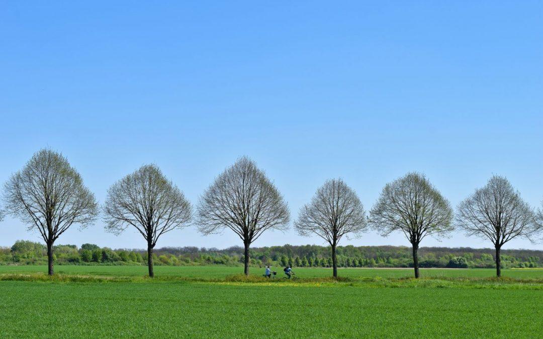 Obstbaumpflanzung